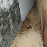 Eliminate Mold and Mildew in the Home